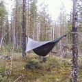 hammock-in-woods