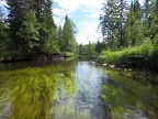 Stream in the boreal forest