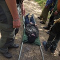 Litter being carried on a survival course